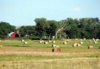 Hay field in Emmet, Nebraska